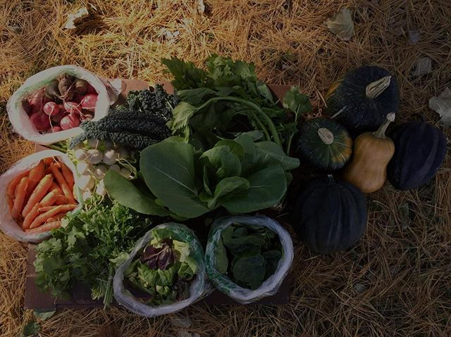 Final CSA share last week: Bulk beets/radish/turnips/carrots, cilantro, parsley, kale, spinach, loose leaf lettuce, celery, kale, bok choy, green onion, buttercup/acorn/butternut squashes. . 💚 Endless thanks to our friends/members. # #minnesotafarm #fallseason #csa #centralminnesota #northernminnesota #minnesotagrown #notill #winteriscoming #farmforclimate