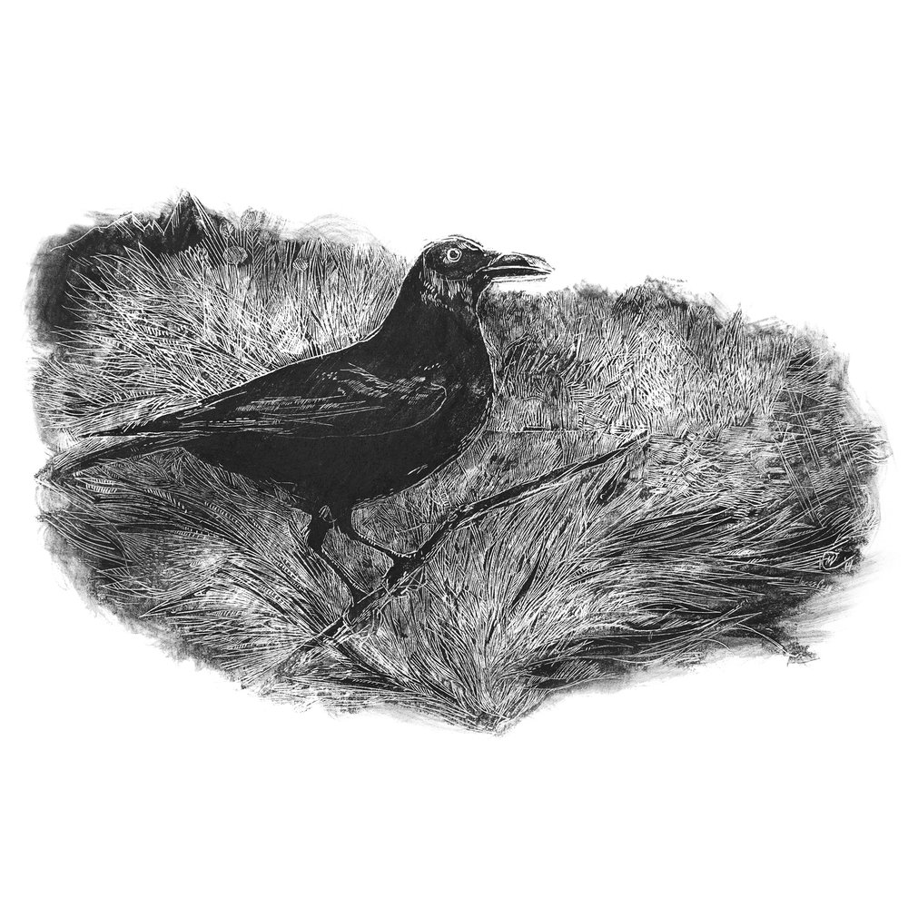 Flores Crow