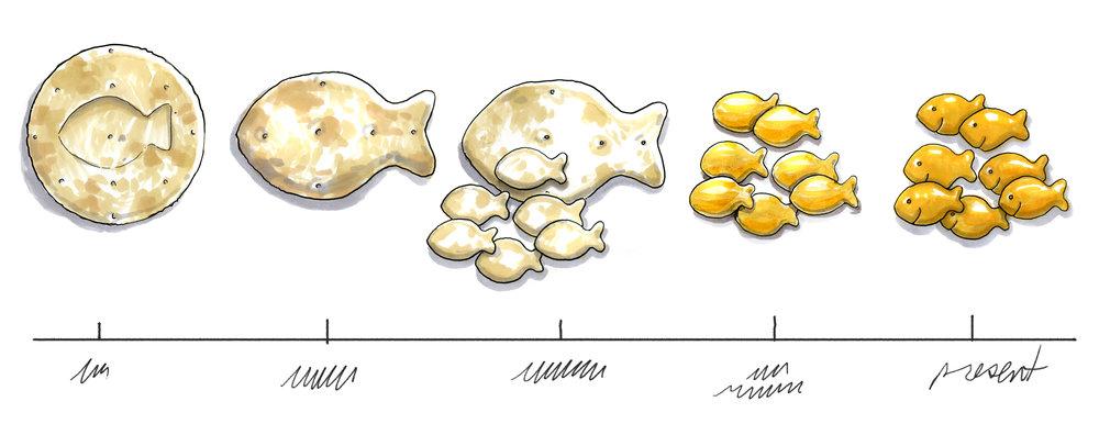 Goldfish timeline