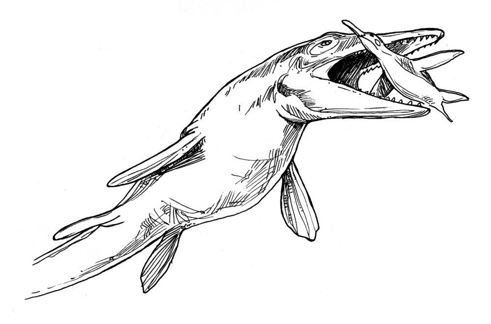 Tylosaurus - hunting