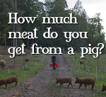 how-much-meat-do-you-get-from-a-pig.jpg