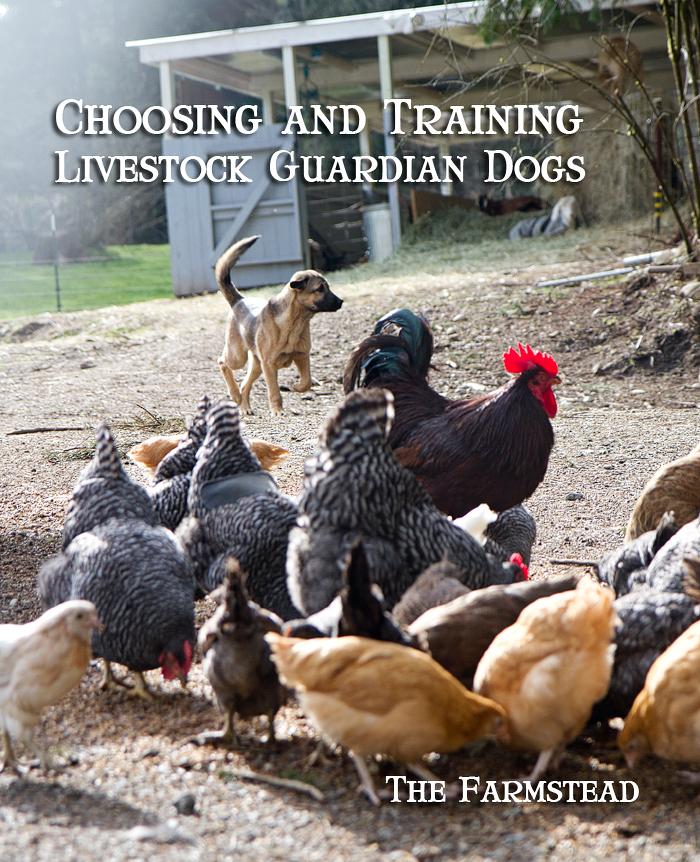 choosing-and-training-lgds.jpg