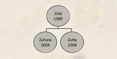 zola_.png