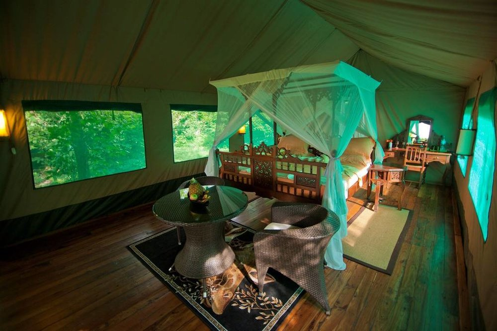 Accommodations | Safari Room