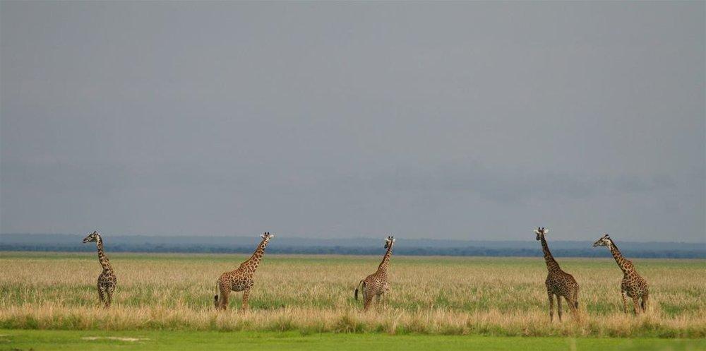 Katuma Wildlife