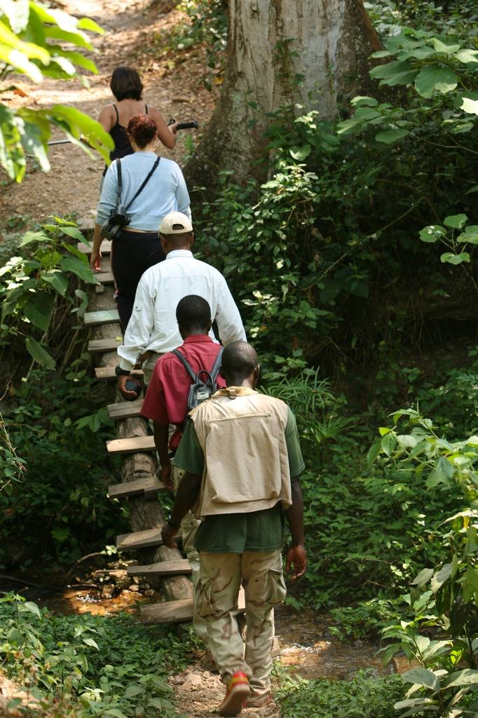 Gombe Forest Lodge | Gombe Trek