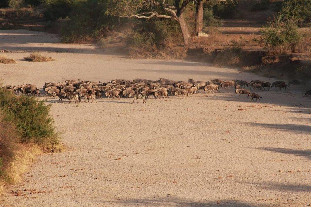 Tarangire River Camp   The Camp