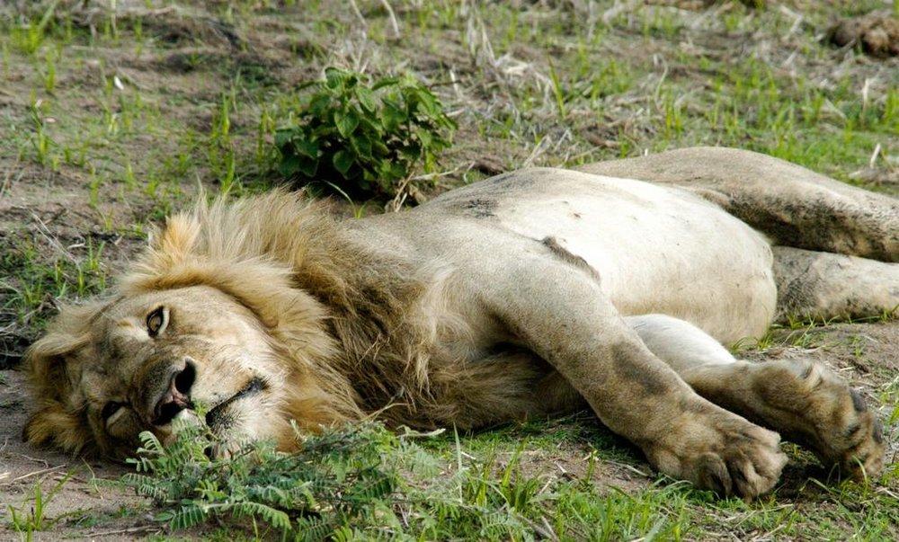 Tarangire River Camp | Wildlife