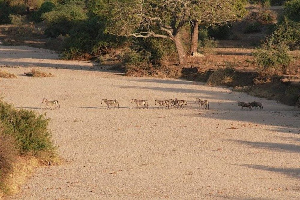 Tarangire River Camp   Wildlife