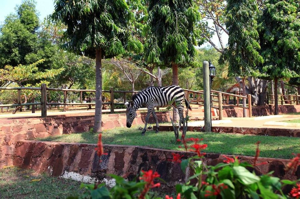 Kigoma Hilltop Hotel Accommodations | Junior Suite