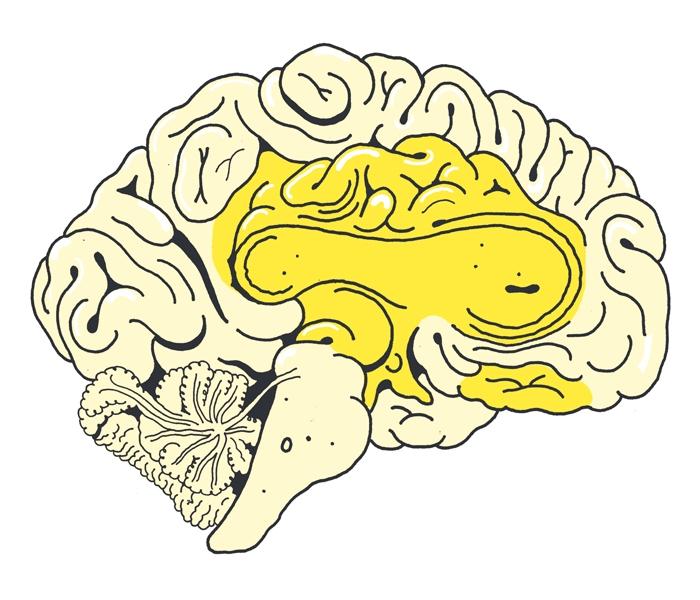Hjerne-gul-foele-nyde-web.jpg