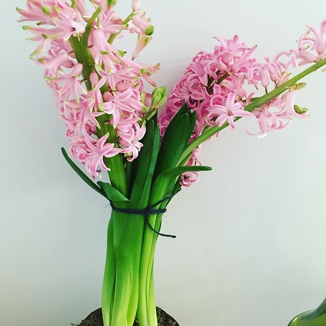 Pretty in pink #hyacinths #colourinspiration #ontrend #pastels #heathfieldsalon #haircolour