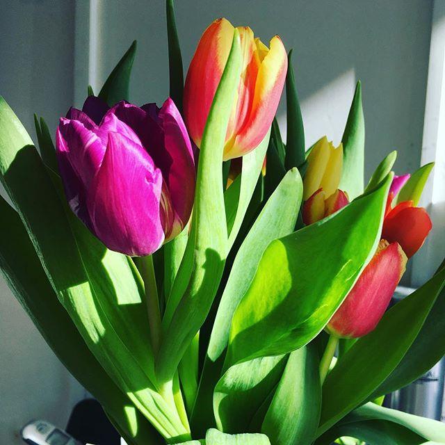 Spoilt by a lovely client #spoilt #tulips #lucky #heathfield #perks #flowers
