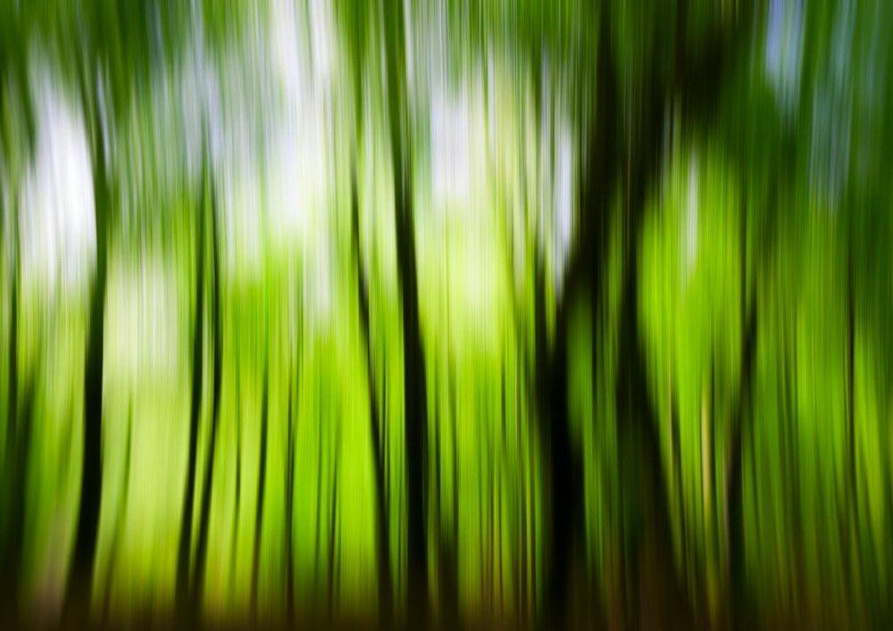 Beech_Blur_PrintReady.jpg