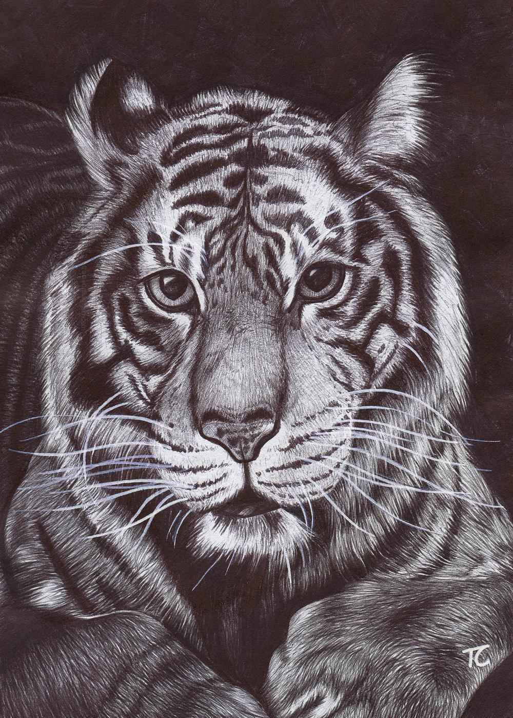 Tiger_SnWM.jpg