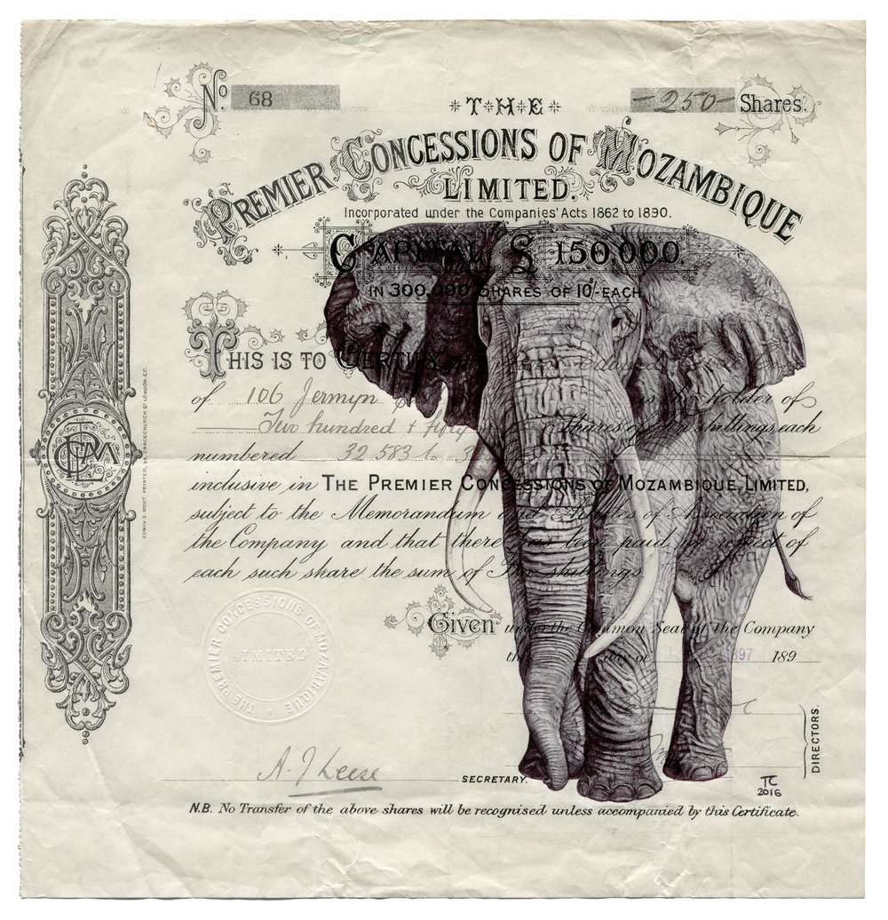 MozambiqueElephant.jpg