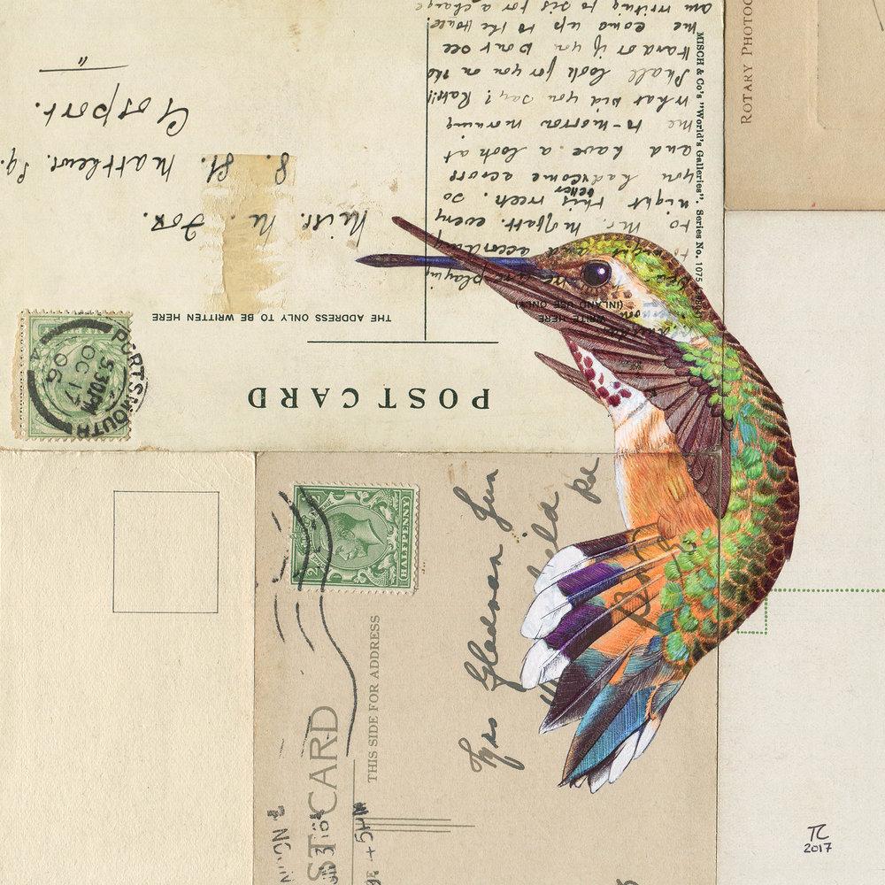 Hummingbird_III_SnWM.jpg
