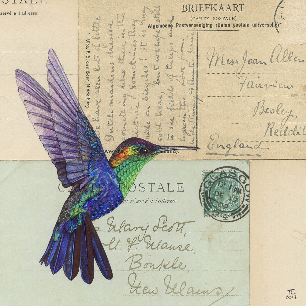 Hummingbird_IV_SnWM.jpg