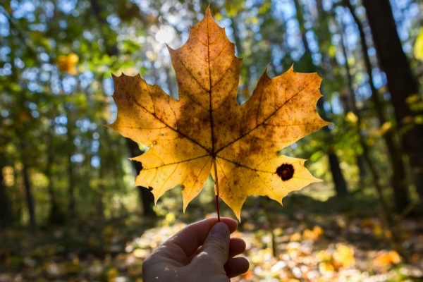 beautiful-autumn-leaf-optimised.jpg