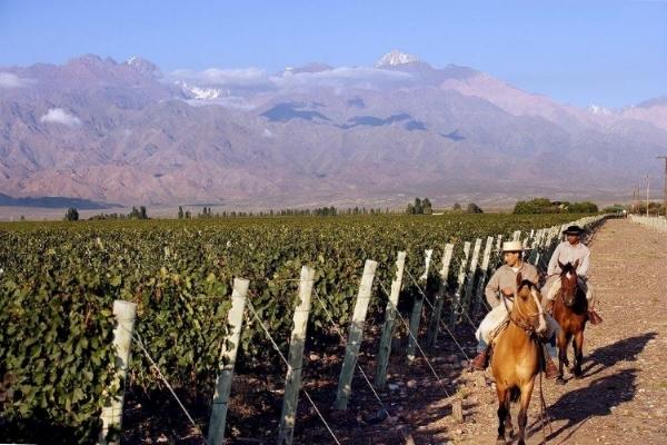 Mendoza wineyards.jpg