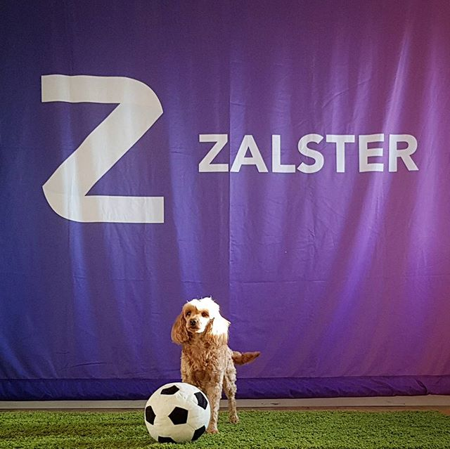 🐶⚽️🏅🎉 #FacebookMarketingPartner #Zalster