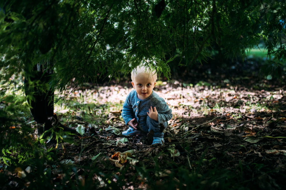 A toddler  crouches down and peers underneath a tree looking directly ar the camera during autumn family photo shoot at Westonbirt Arboretum.