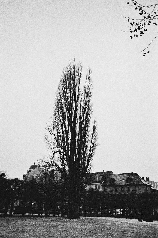 Photo21_21.jpg