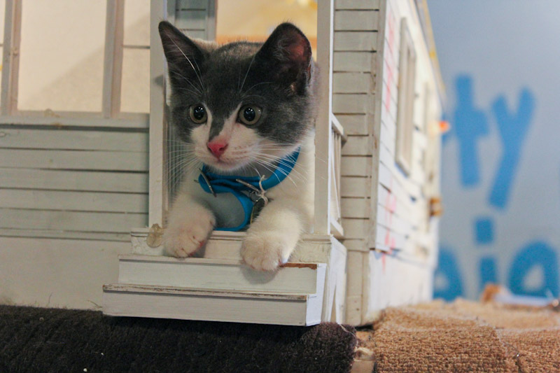 Kitty Citizen
