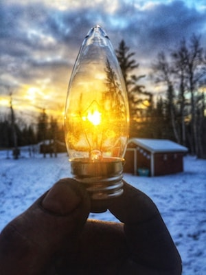 Bulb against winter sunset backdrop