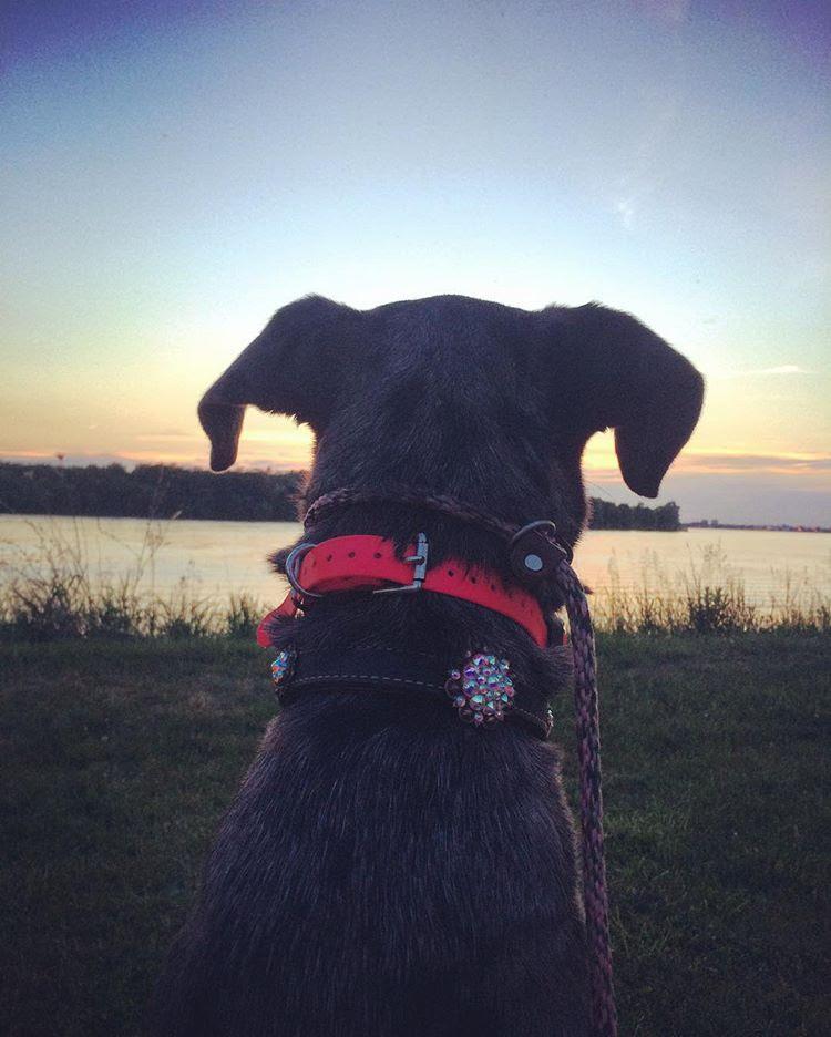 rivers edge canine.jpg