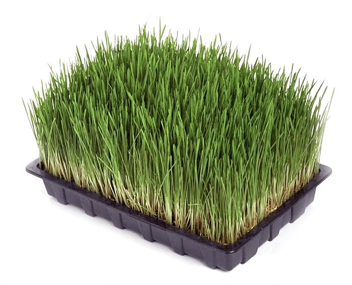 Aconbury-Sprouts-1.png