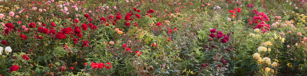Planting & Care -