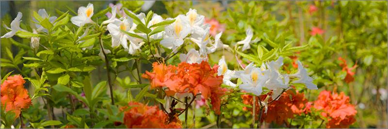 parkside_nursery_shrubs_wide_4405.jpg