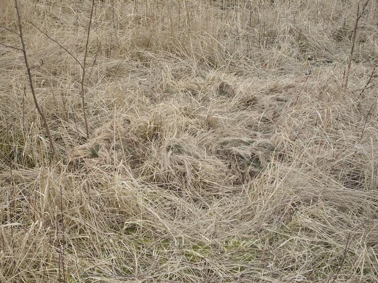 From GhillieTreff.de, clearly a ghillie enthusiast whose aim is total invisibility