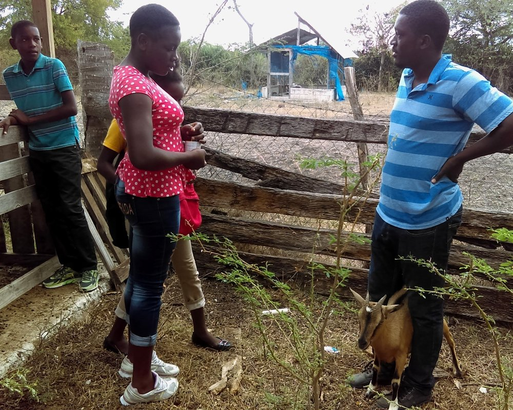 A student named Guirelene (in polka dot shirt) was a little hesitant to vaccinate her first goat, but with Raphael's guidance quickly became an expert.