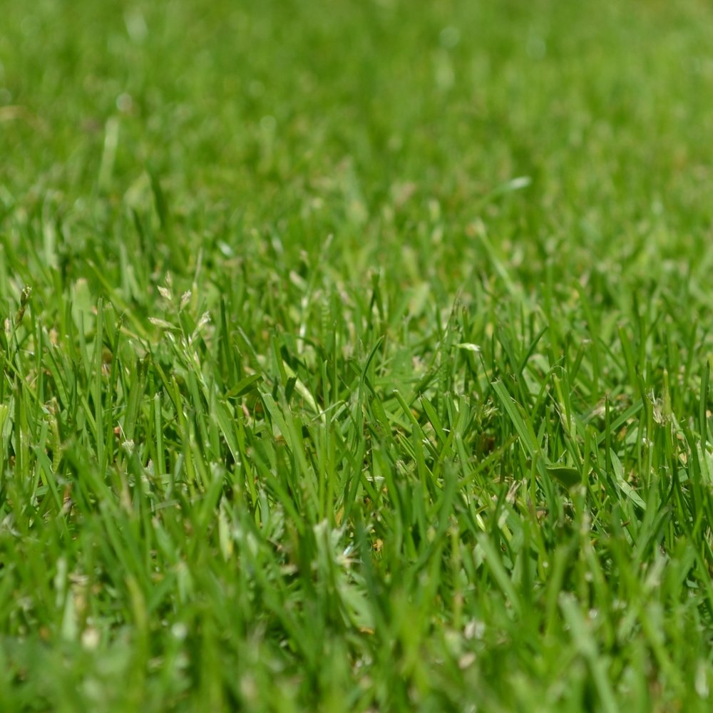 Lawn and ornamental service, lawn and shrub care, lawn care, sebastian lawn care, vero beach lawn care, indian river county lawn care, vero beach lawn fertilizer, how to make your grass greener, bug assassin lawn treatment, weed control