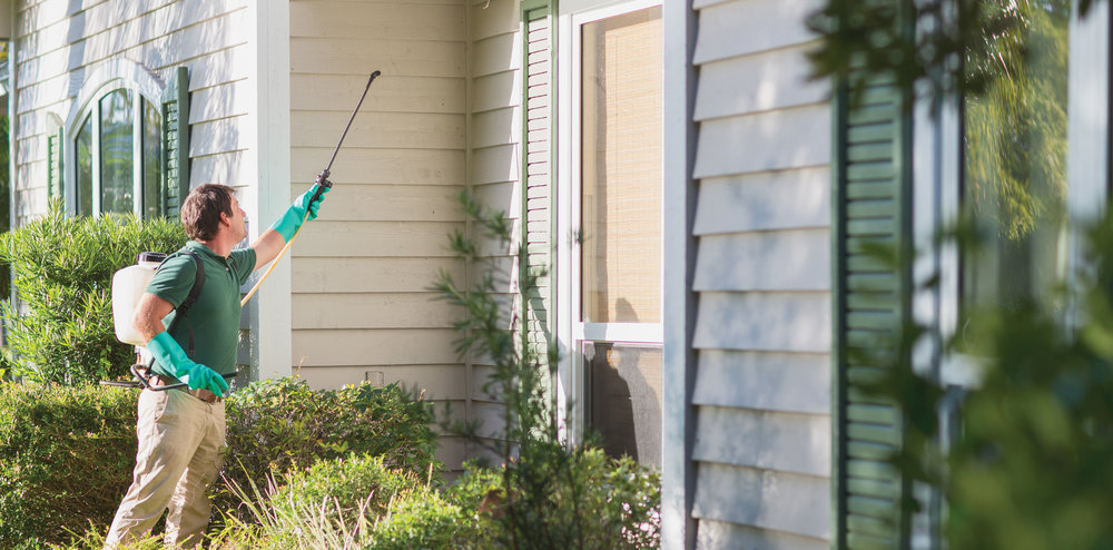 Bug Assassin Pest Management, Vero Beach Pest Control, Sebastian Pest Control, Exterminators, Vero Beach Exterminator, Sebastian Exterminator, Best pest control companies in Indian River County,  , Technician applying pesticides