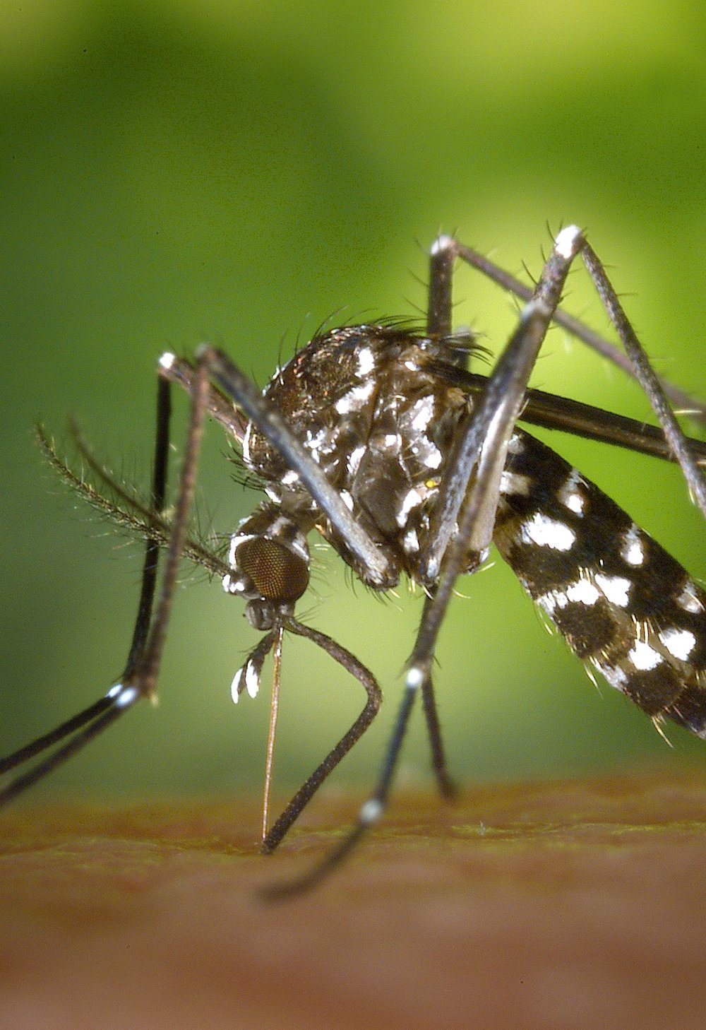 Mosquito fogging, mosquito spraying, how to get rid of mosquitos,Bug Assassin Pest Management, mosquito suppression, Vero Beach Pest Control, Sebastian Pest Control, Exterminators, Vero Beach Exterminator, Sebastian Exterminator, Best pest control companies in Indian River County