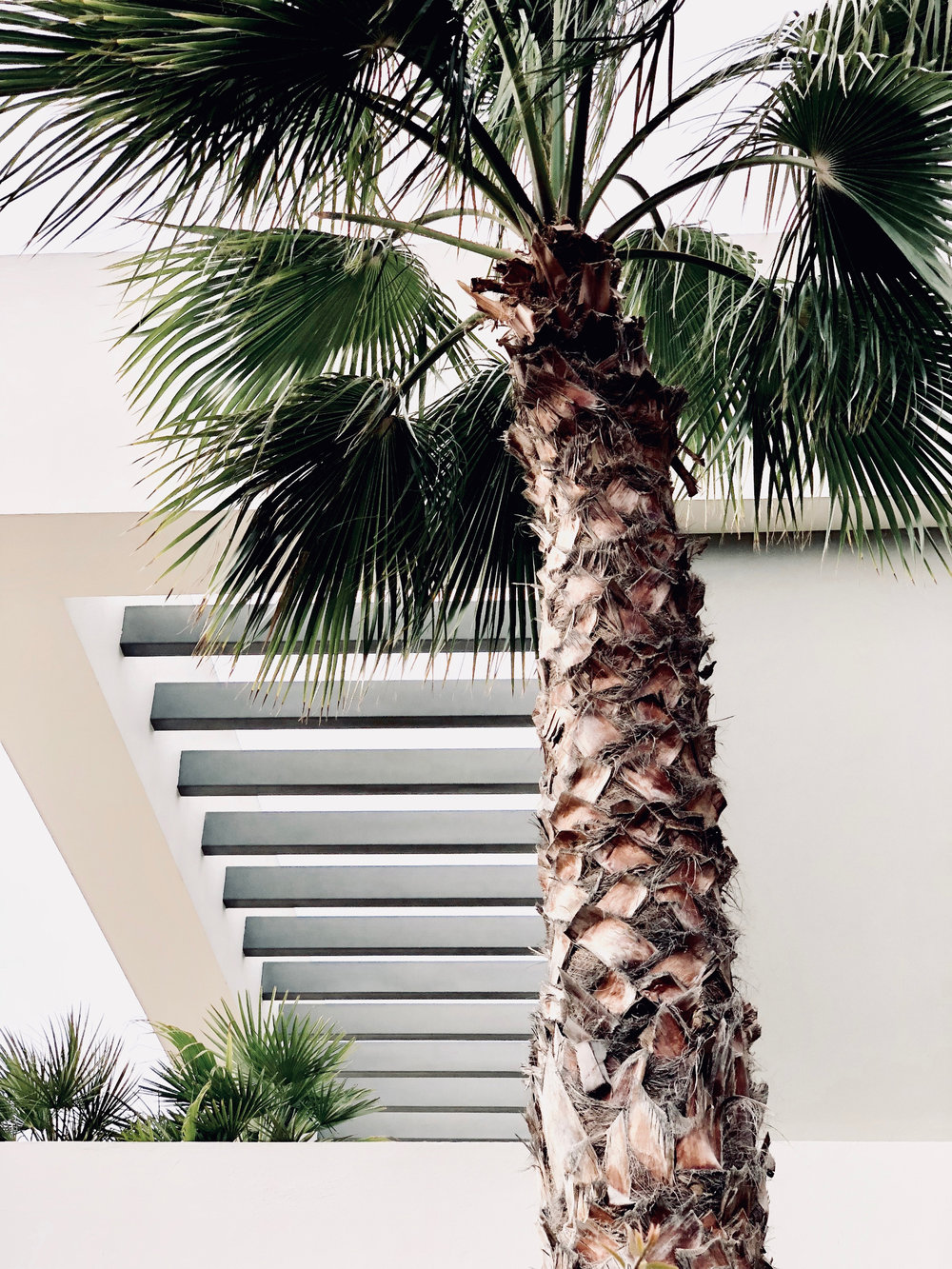 palm_tree_pruning_tips.jpg