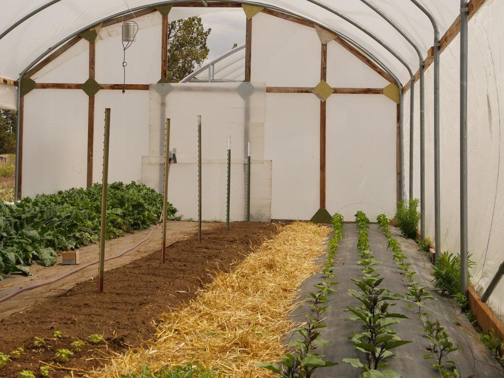 Hoop House Planting.JPG