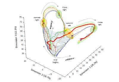 Évolution de l'activité neuronale dans le cortex pré-moteur durant la prise de décision  (gracieuseté du Dr Paul Cisek)