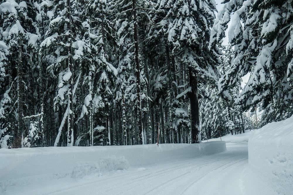 03-snowshoeing-2.jpg