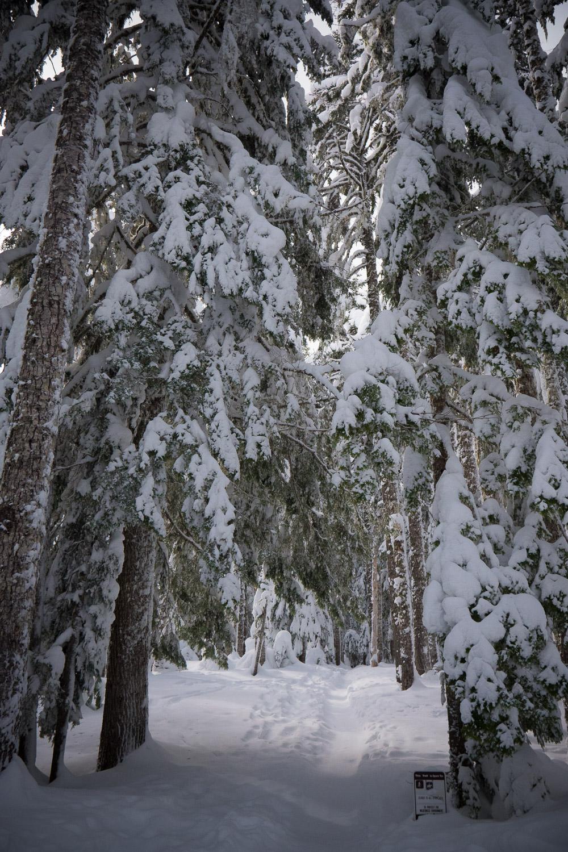 03-snowshoeing-4.jpg