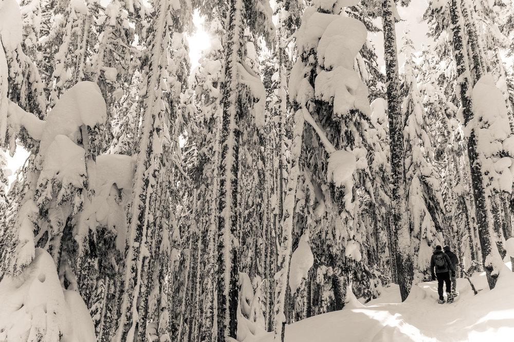 03-snowshoeing-9.jpg