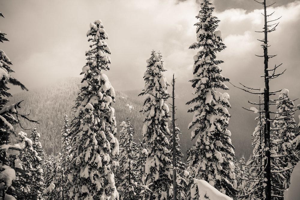 03-snowshoeing-11.jpg
