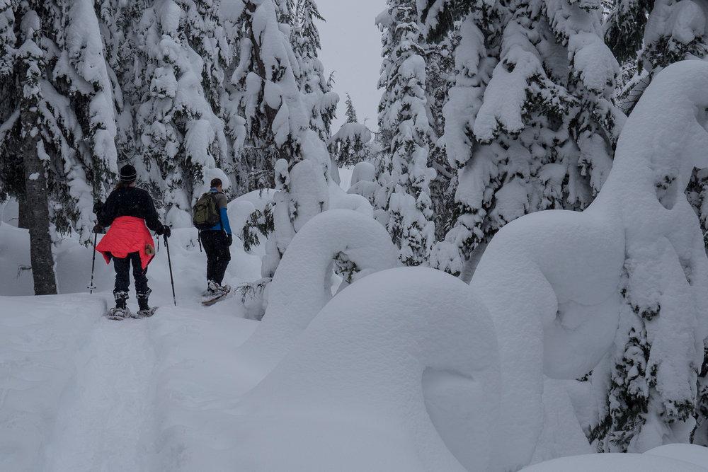 03-snowshoeing-16.jpg