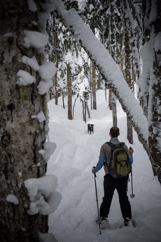 03-snowshoeing-19.jpg