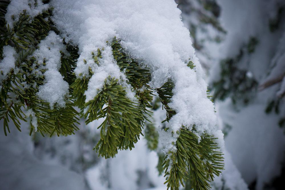 03-snowshoeing-22.jpg