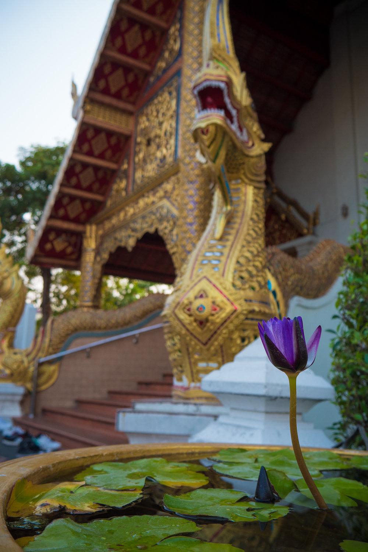 03-chiangmaiday1-23.jpg