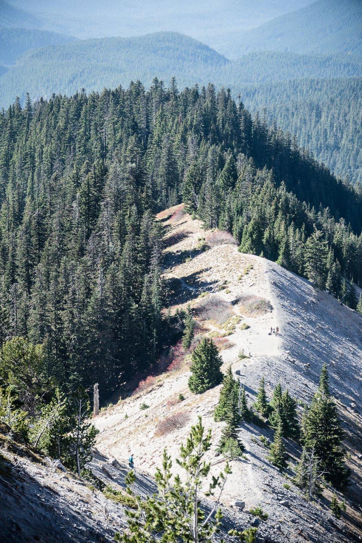 10-timberlinezigzag-13.jpg